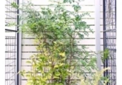 植栽セット
